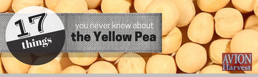 yellowpea